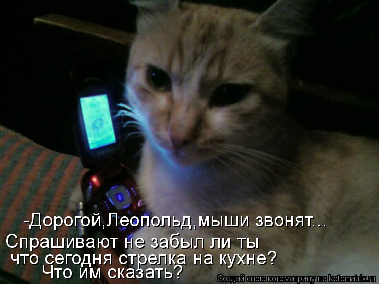 Котоматрица: Что им сказать? -Дорогой,Леопольд,мыши звонят... Спрашивают не забыл ли ты  что сегодня стрелка на кухне?