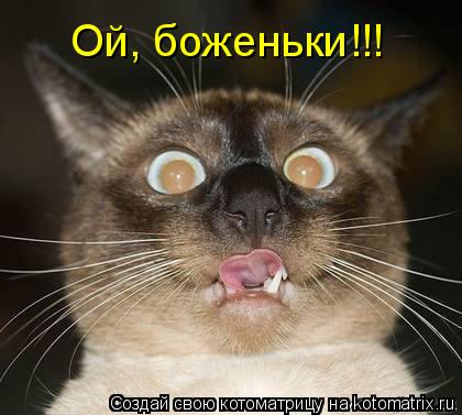Котоматрица: Ой, боженьки!!!