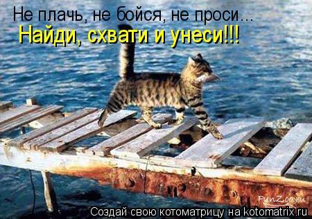Котоматрица: Не плачь, не бойся, не проси... Найди, схвати и унеси!!!