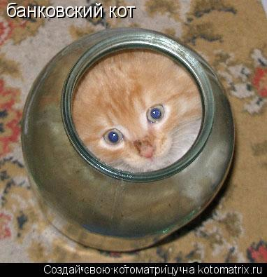 Котоматрица: банковский кот