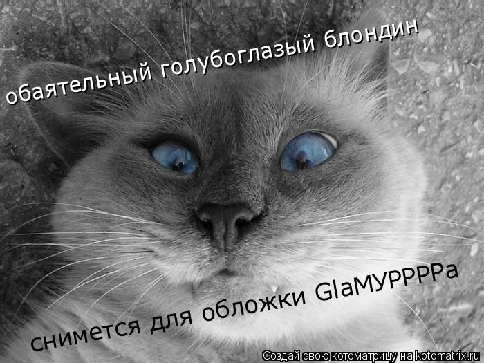 Котоматрица: обаятельный голубоглазый блондин снимется для обложки GlaМУРРРРа