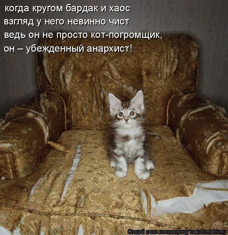 Котоматрица: когда кругом бардак и хаос взгляд у него невинно чист ведь он не просто кот-погромщик, он – убежденный анархист!