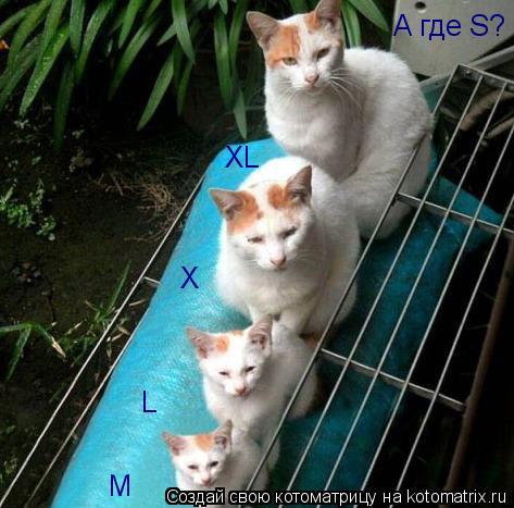 Котоматрица: M L X XL А где S?