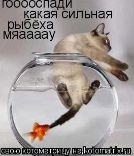 Котоматрица: гооооспади какая сильная рыбёха мяаааау