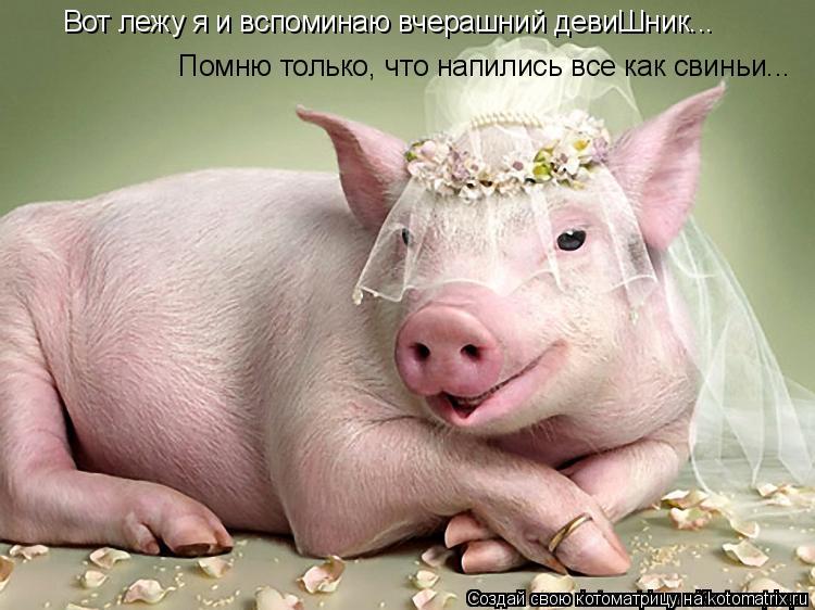 Котоматрица: Вот лежу я и вспоминаю вчерашний девиШник... Помню только, что напились все как свиньи...