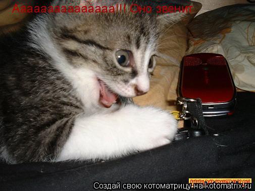 Котоматрица: Ааааааааааааааа!!! Оно звенит