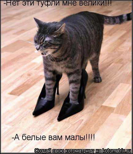 Котоматрица: -Нет эти туфли мне велики!!! -А белые вам малы!!!!