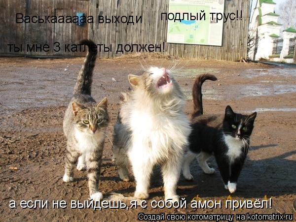 Котоматрица: Васькаааааа выходи  подлый трус!! ты мне 3 катлеты должен! а если не выйдешь,я с собой амон привёл!