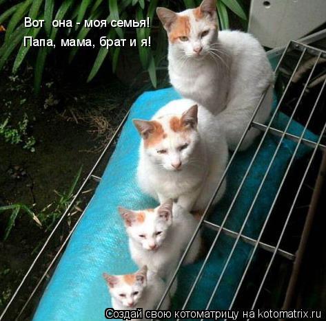 Котоматрица: Вот  она - моя семья! Папа, мама, брат и я!
