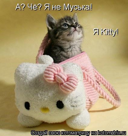 Котоматрица: А? Чё? Я не Муська! Я Kitty!