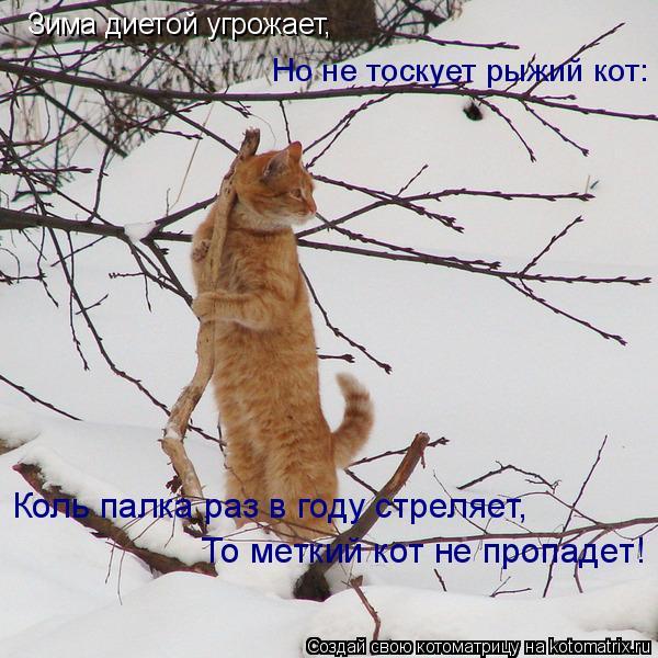 Котоматрица: То меткий кот не пропадет! Но не тоскует рыжий кот: Зима диетой угрожает, Коль палка раз в году стреляет,