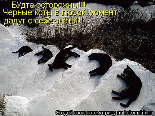 Котоматрица: БУдте осторожны!!! Черные коты в любой момент дадут о себе знать!!!