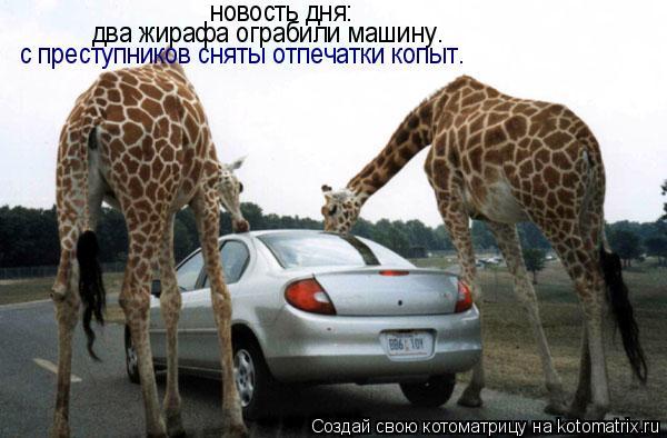 Котоматрица: новость дня: два жирафа ограбили машину. с преступников сняты отпечатки копыт.