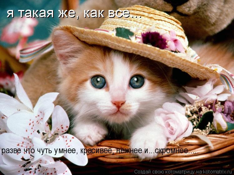 Котоматрица: я такая же, как все... разве что чуть умнее, красивее, нежнее и...скромнее....