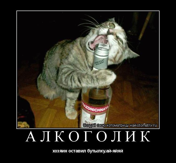Котоматрица: Алкоголик хозяин оставил бутылку.ай-яйяй