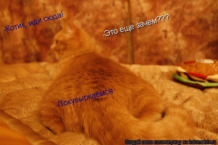 Котоматрица: -Котик, иди сюда! -Это еще зачем??? -Покувыркаемся