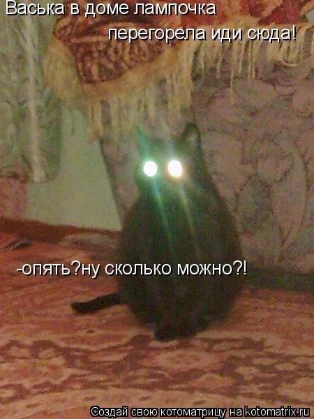 Котоматрица: Васька в доме лампочка  перегорела иди сюда! -опять?ну сколько можно?!