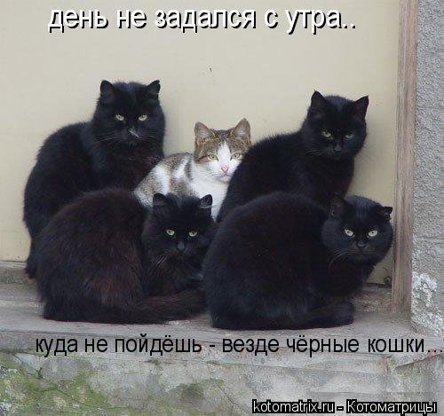 Котоматрица: день не задался с утра.. куда не пойдёшь - везде чёрные кошки...
