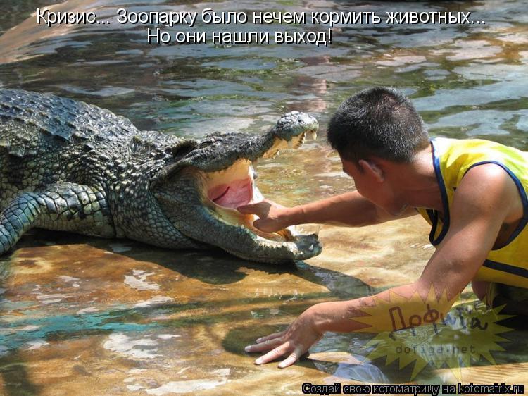 Котоматрица: Кризис... Зоопарку было нечем кормить животных... Но они нашли выход!
