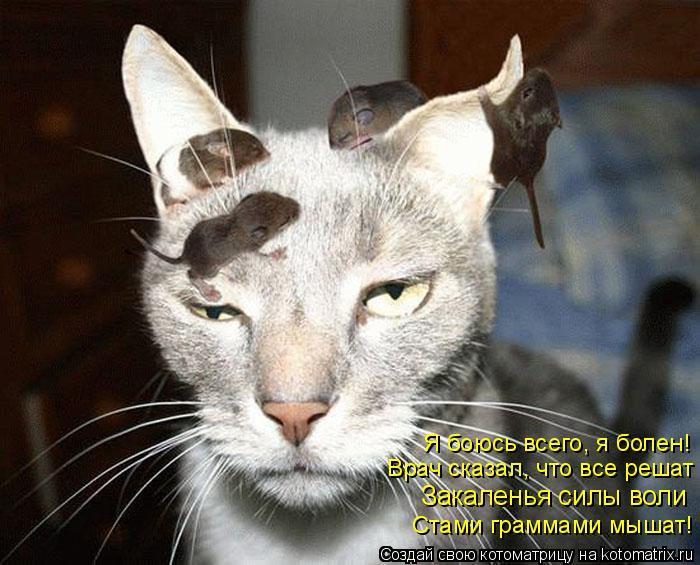Котоматрица: Стами граммами мышат! Закаленья силы воли Врач сказал, что все решат Я боюсь всего, я болен!