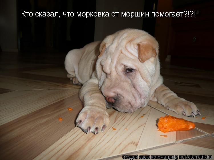 Котоматрица: Кто сказал, что морковка от морщин помогает?!?!