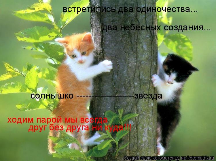 Котоматрица: два небесных создания... встретились два одиночества... солнышко -------------------звезда ходим парой мы всегда друг без друга ни куда!!!