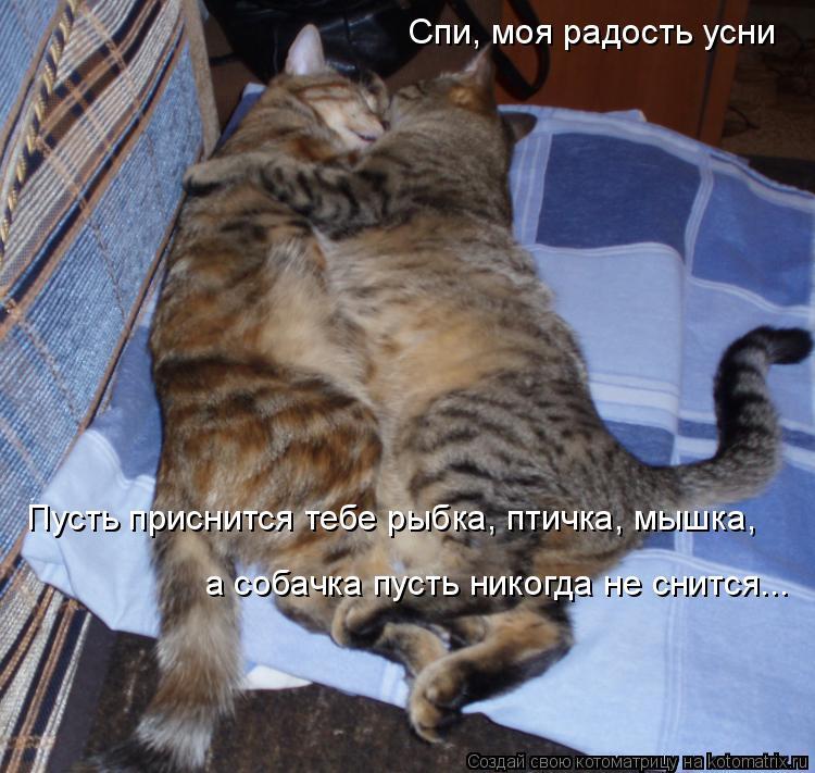 Котоматрица: Спи, моя радость усни Пусть приснится тебе рыбка, птичка, мышка,  а собачка пусть никогда не снится...