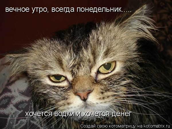 Котоматрица: вечное утро, всегда понедельник..... хочется водки и хочется денег