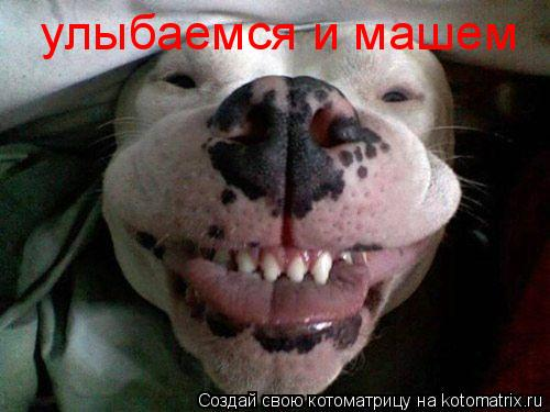 Котоматрица: улыбаемся и машем