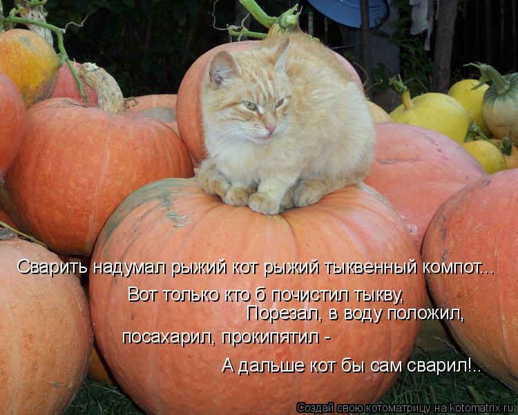 Котоматрица: Вот только кто б почистил тыкву,  Порезал, в воду положил, посахарил, прокипятил - А дальше кот бы сам сварил!.. Сварить надумал рыжий кот рыжи