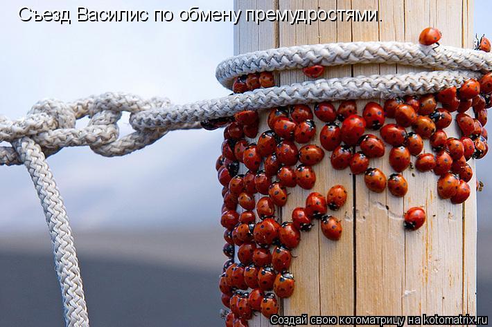 Котоматрица: Съезд Василис по обмену премудростями.