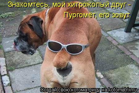 Котоматрица: Знакомтесь, мой хитрожопый друг - Пургомёт, его зовут.