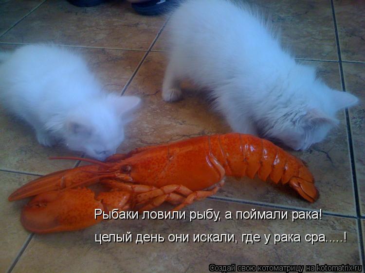 Котоматрица: Рыбаки ловили рыбу, а поймали рака! целый день они искали, где у рака сра.....!