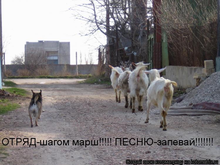 Котоматрица: ОТРЯД-шагом марш!!!!! ПЕСНЮ-запевай!!!!!!!