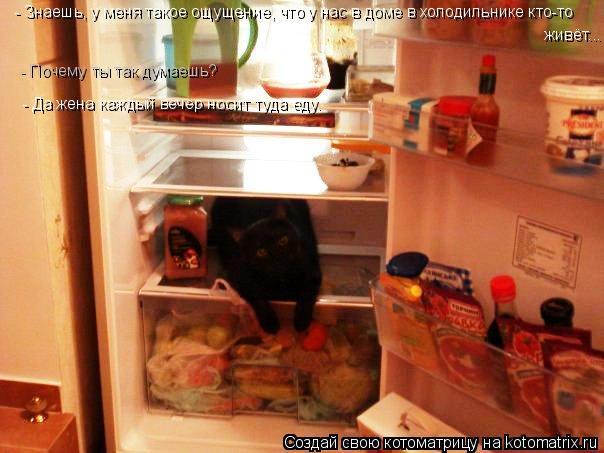 Котоматрица: - Знаешь, у меня такое ощущение, что у нас в доме в холодильнике кто-то  живёт... - Почему ты так думаешь? - Да жена каждый вечер носит туда еду.