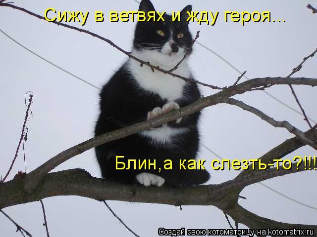 Котоматрица: Сижу в ветвях и жду героя... Блин,а как слезть-то?!!!