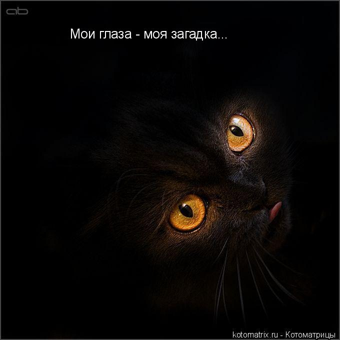 Котоматрица: Мои глаза - моя загадка...
