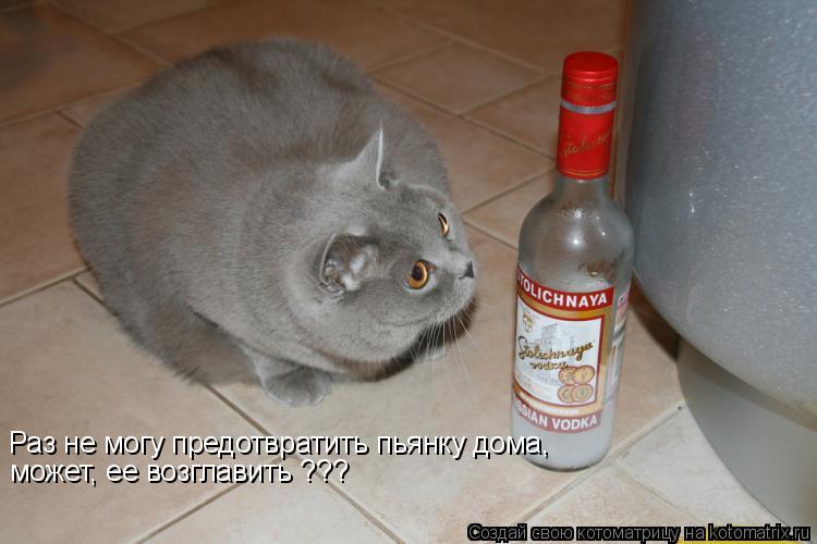 Котоматрица: Раз не могу предотвратить пьянку дома,  может, ее возглавить ???