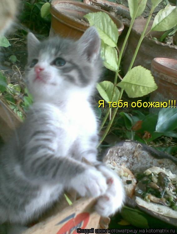 Котоматрица: Я тебя обожаю!!!