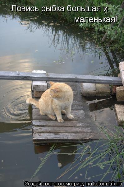 Котоматрица: -Ловись рыбка большая и маленькая! маленькая!