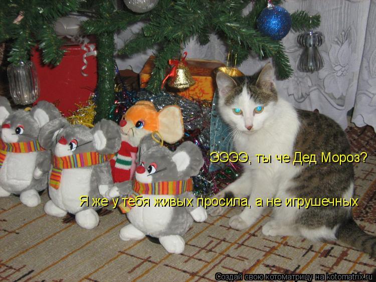 Котоматрица: ЭЭЭЭ, ты че Дед Мороз? Я же у тебя живых просила, а не игрушечных