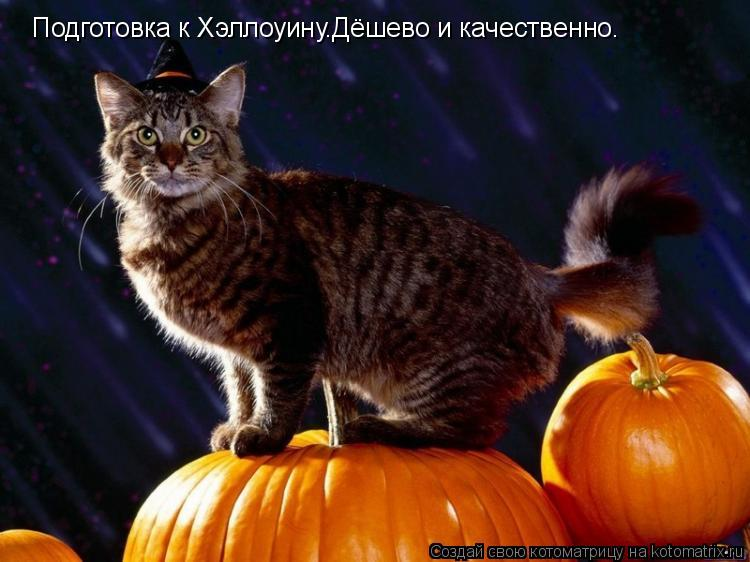 Котоматрица: Подготовка к Хэллоуину.Дёшево и качественно.