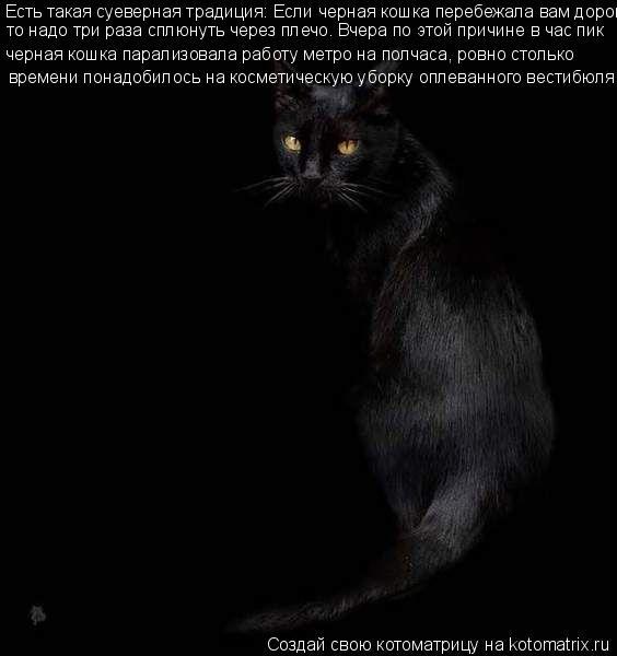 Котоматрица: Есть такая суеверная традиция: Если черная кошка перебежала вам дорогу, то надо три раза сплюнуть через плечо. Вчера по этой причине в час п