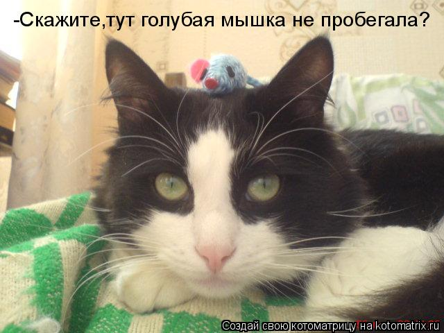Котоматрица: -Скажите,тут голубая мышка не пробегала?