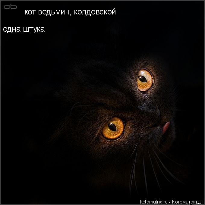 Котоматрица: кот ведьмин, колдовской одна штука