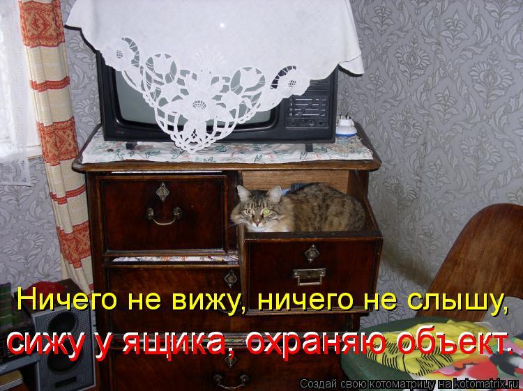 Котоматрица: Ничего не вижу, ничего не слышу, сижу у ящика, охраняю объект. сижу у ящика, охраняю объект.