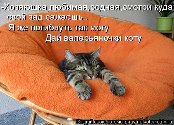 Котоматрица: -Хозяюшка,любимая,родная,смотри куда  свой зад сажаешь..  Я же погибнуть так могу Дай валерьяночки коту
