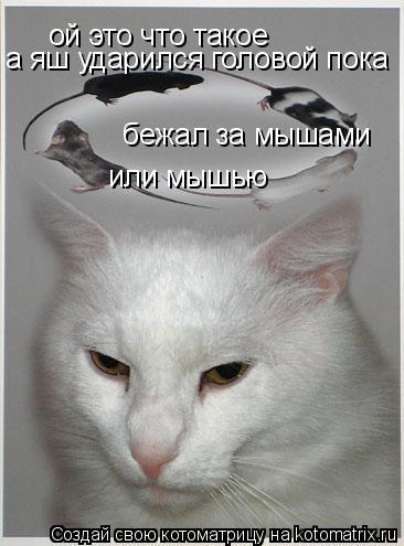 Котоматрица: ой это что такое а яш ударился головой пока бежал за мышами или мышью