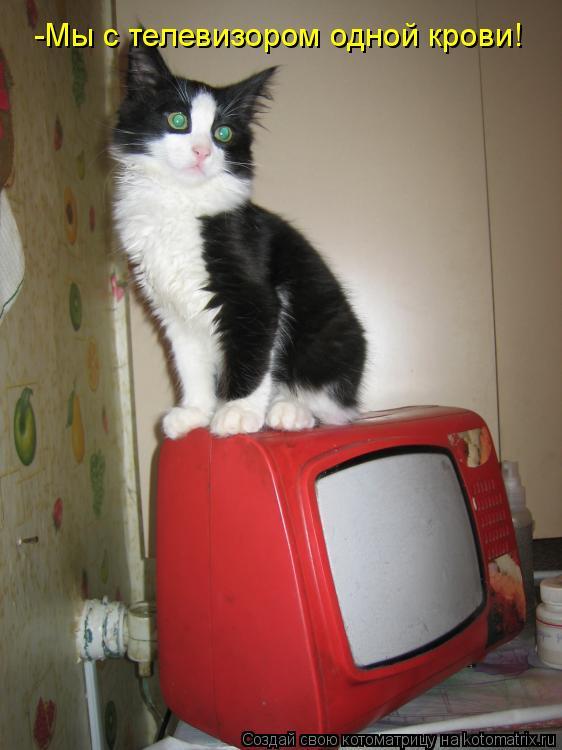 Котоматрица: -Мы с телевизором одной крови!