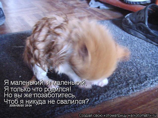 Котоматрица: Я маленький, я маленький, Я только что родился! Но вы же позаботитесь, Чтоб я никуда не свалился?